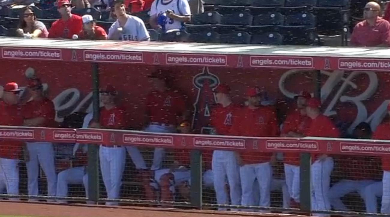angels royals bees delay spring training game