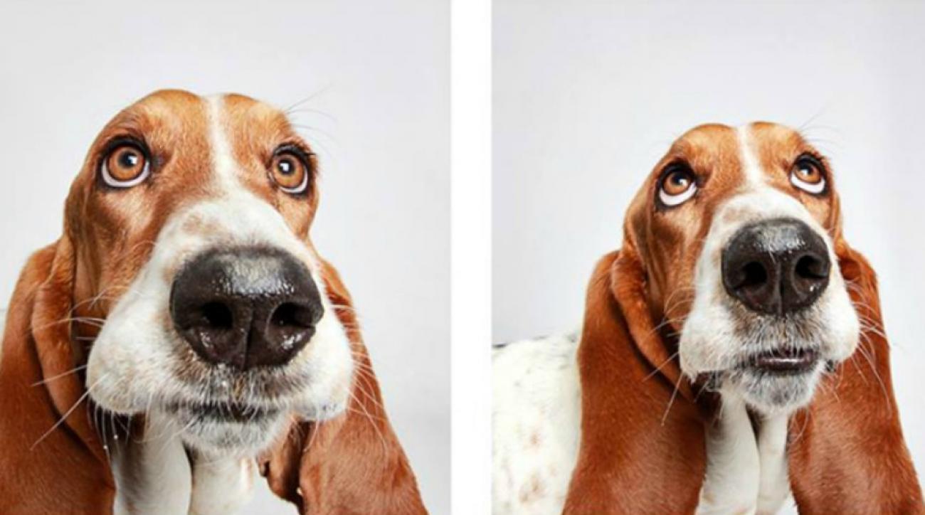 utah-dogs-basset-hound-lead.jpg