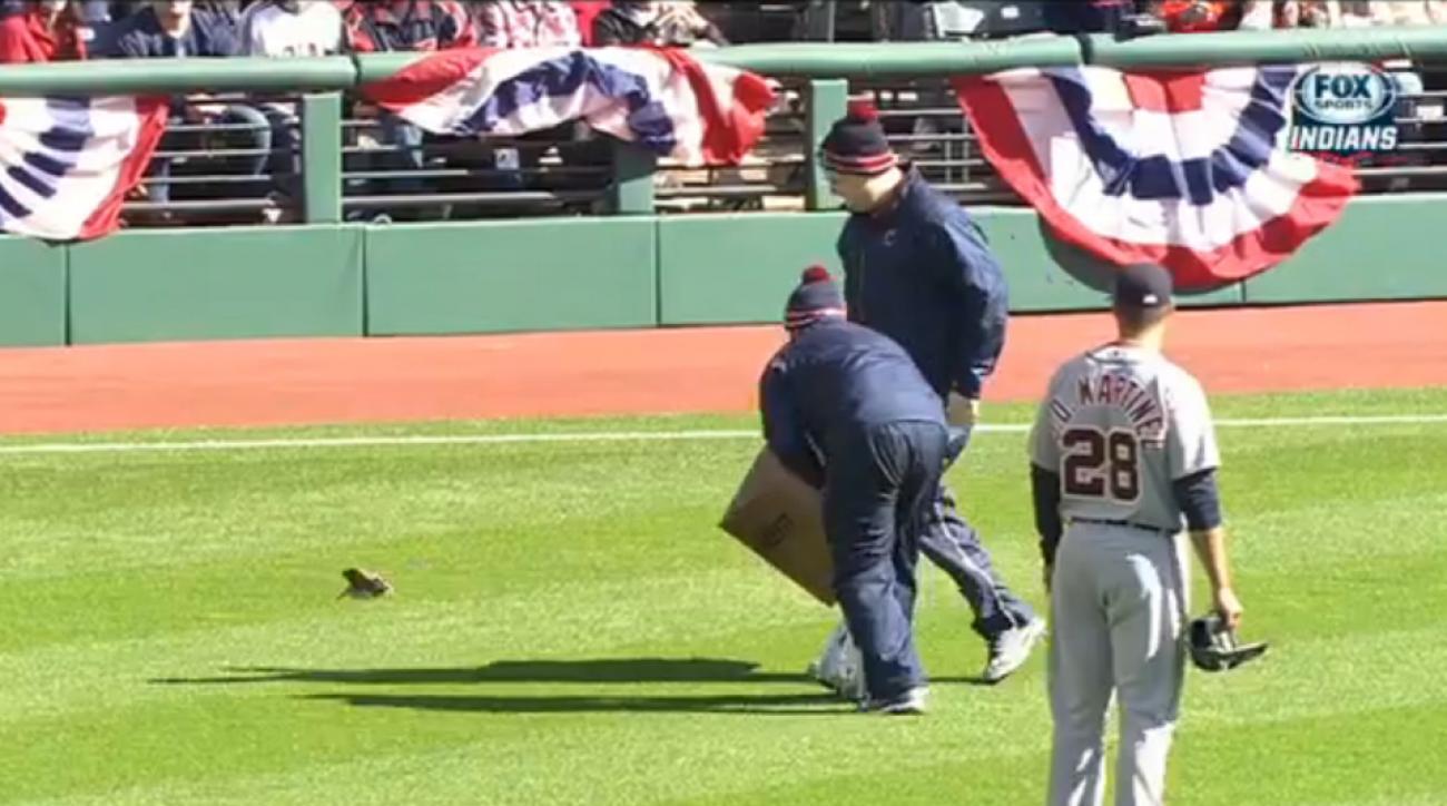 Cleveland Indians bird on field