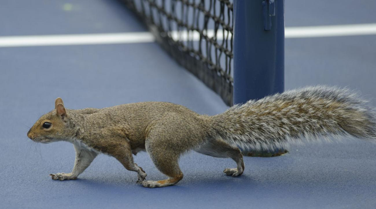 A squirrel also invaded the court during the 2013 U.S. Open