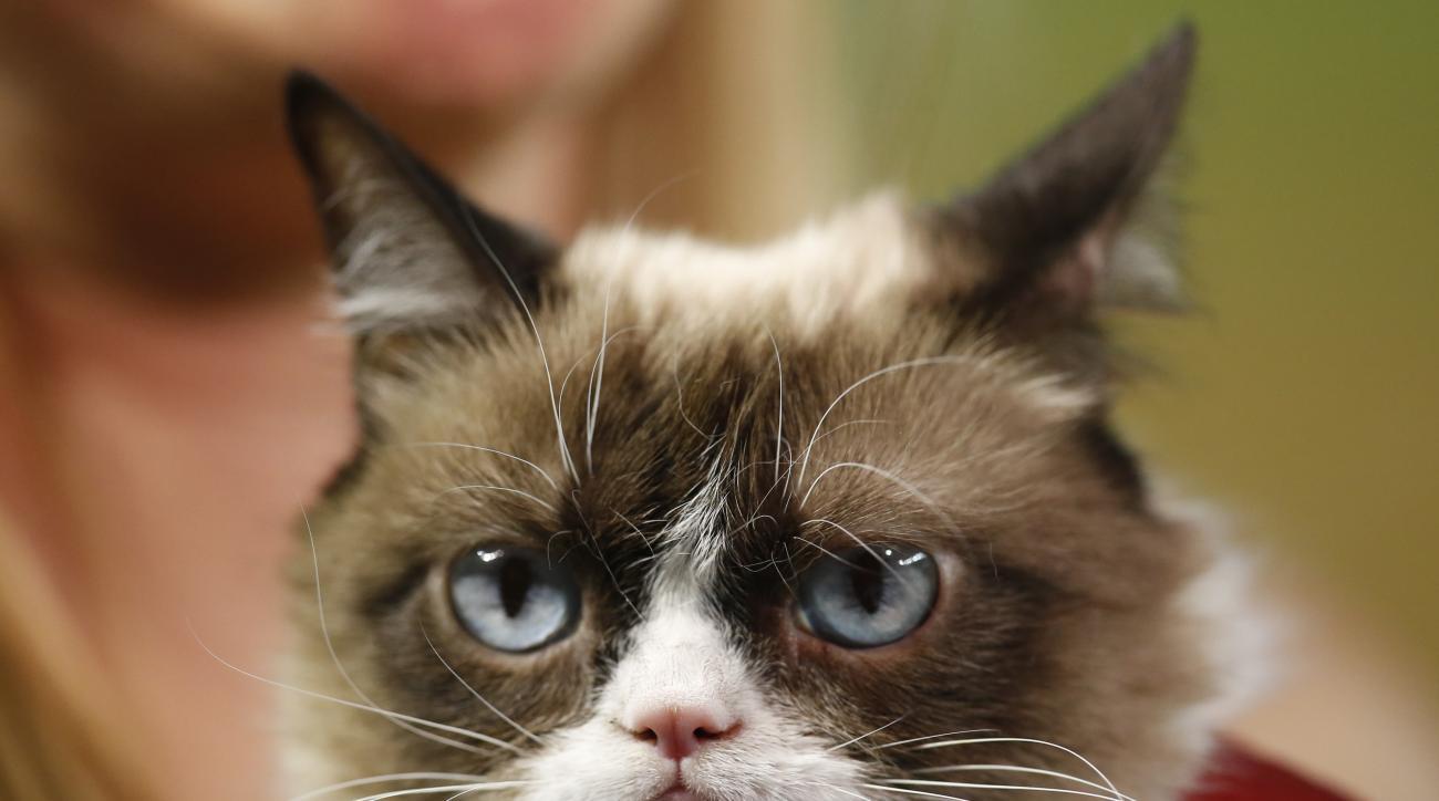 arizona-diamondbacks-grumpy-cat-first-pitch