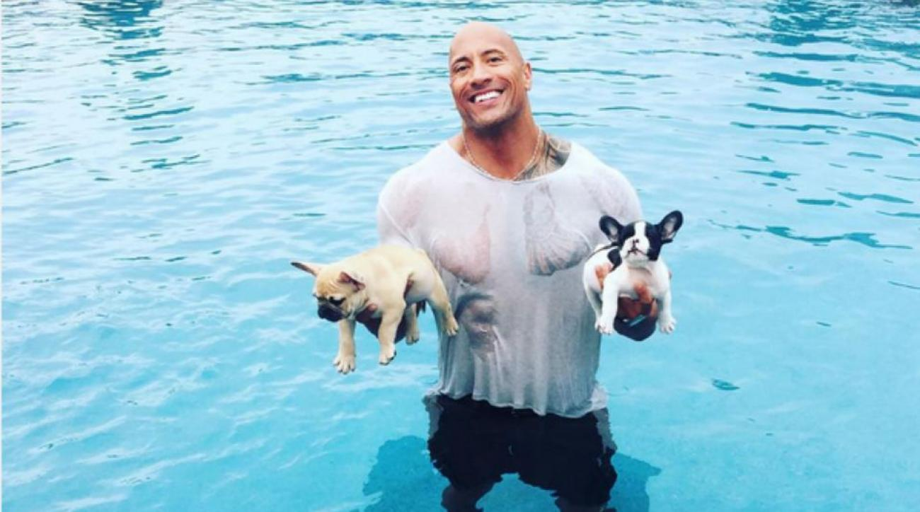 rock-puppies-pool-drowning