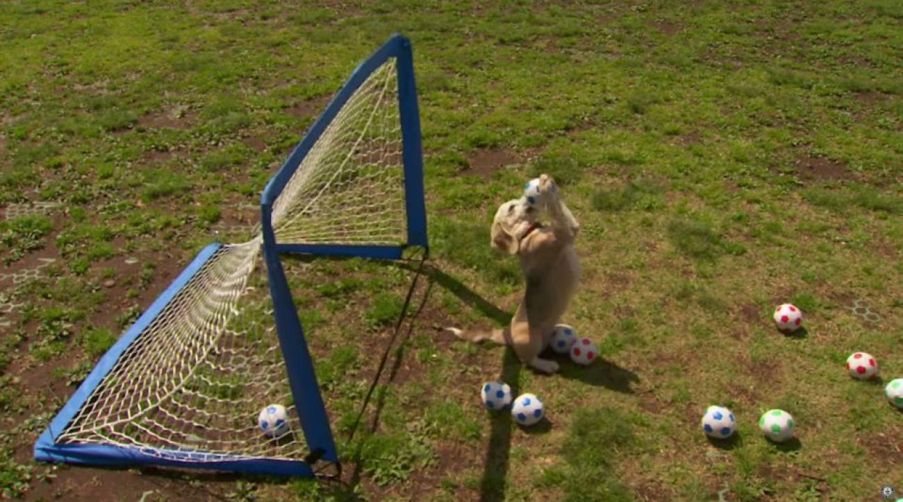soccer-beagle-world-record