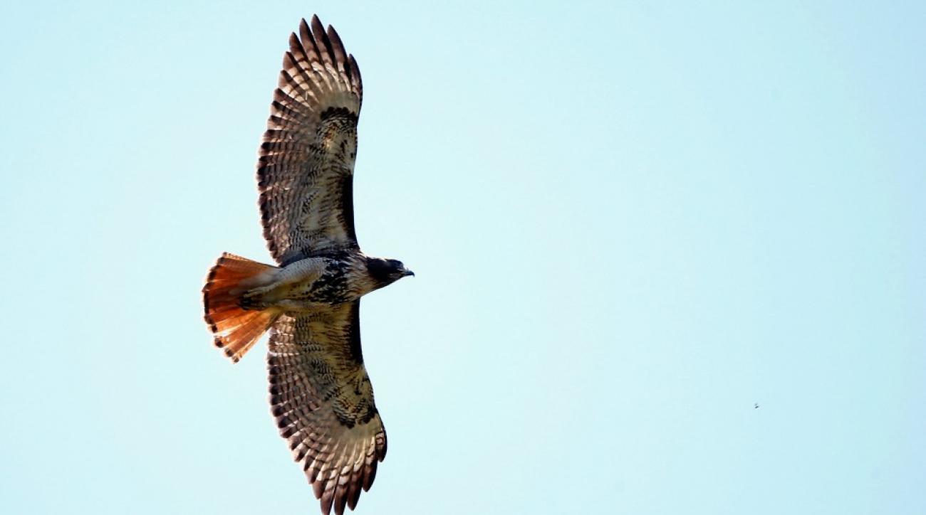 Philadelphia Phillies, Miami Marlins game features dead hawk