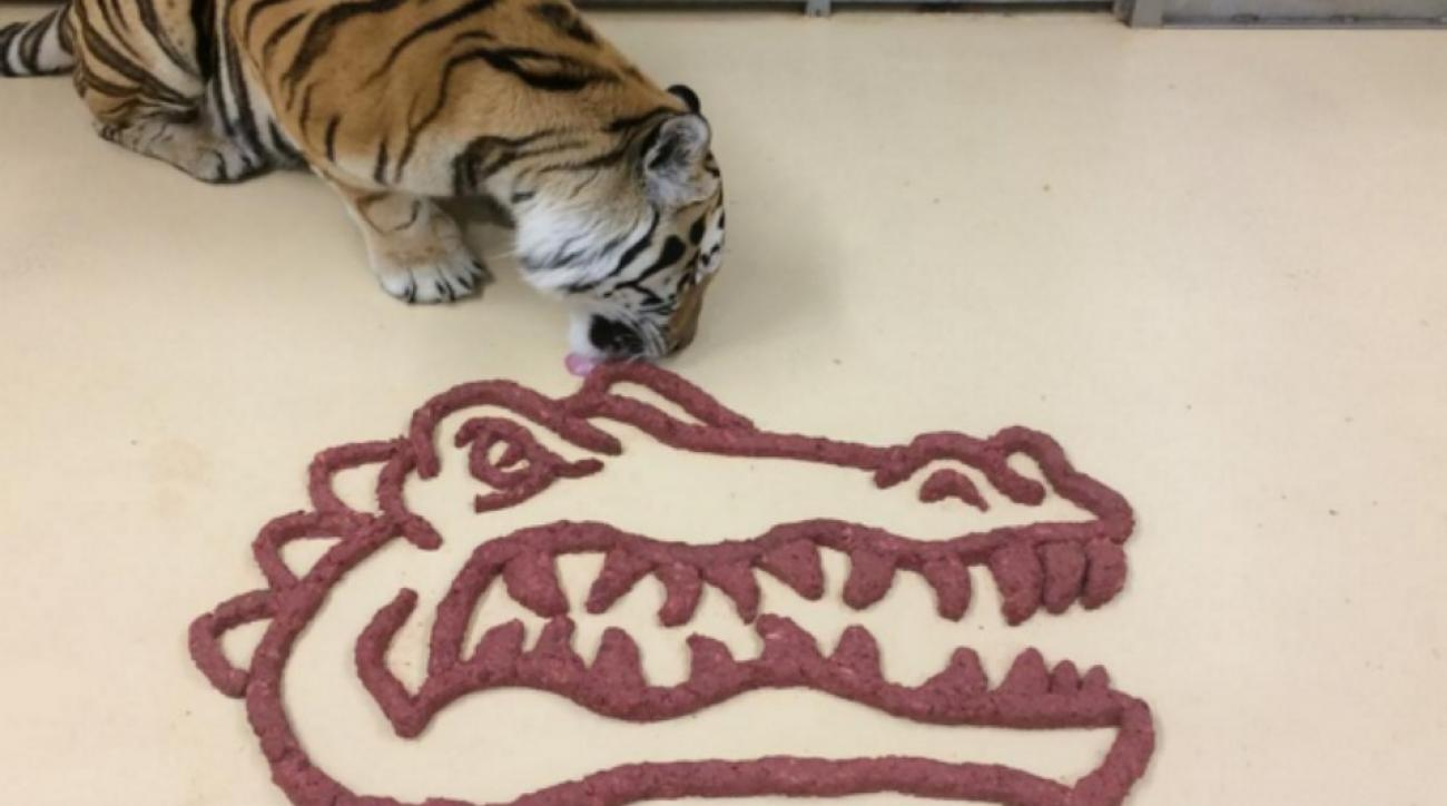 LSU's Mike the Tiger eats Meat in shape of Florida logo