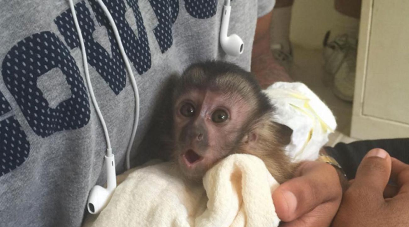 dez bryant dallas cowboys injury monkey