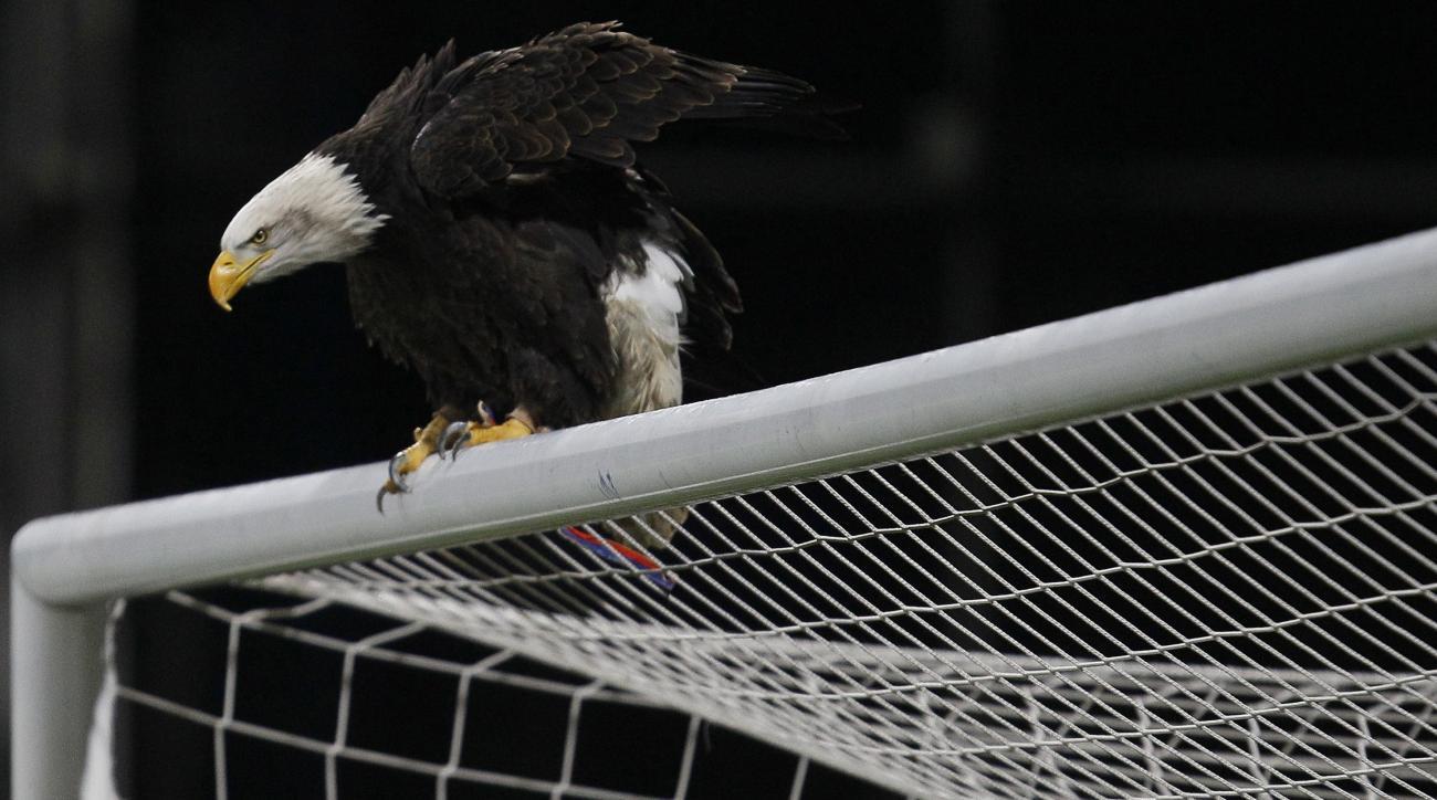 Man arressted suspicion punching Crystal Palace eagle mascot