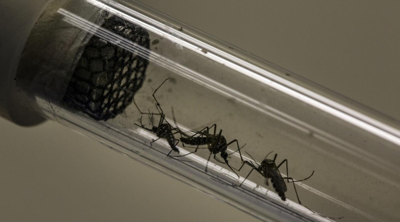 zika virus outbreak explained