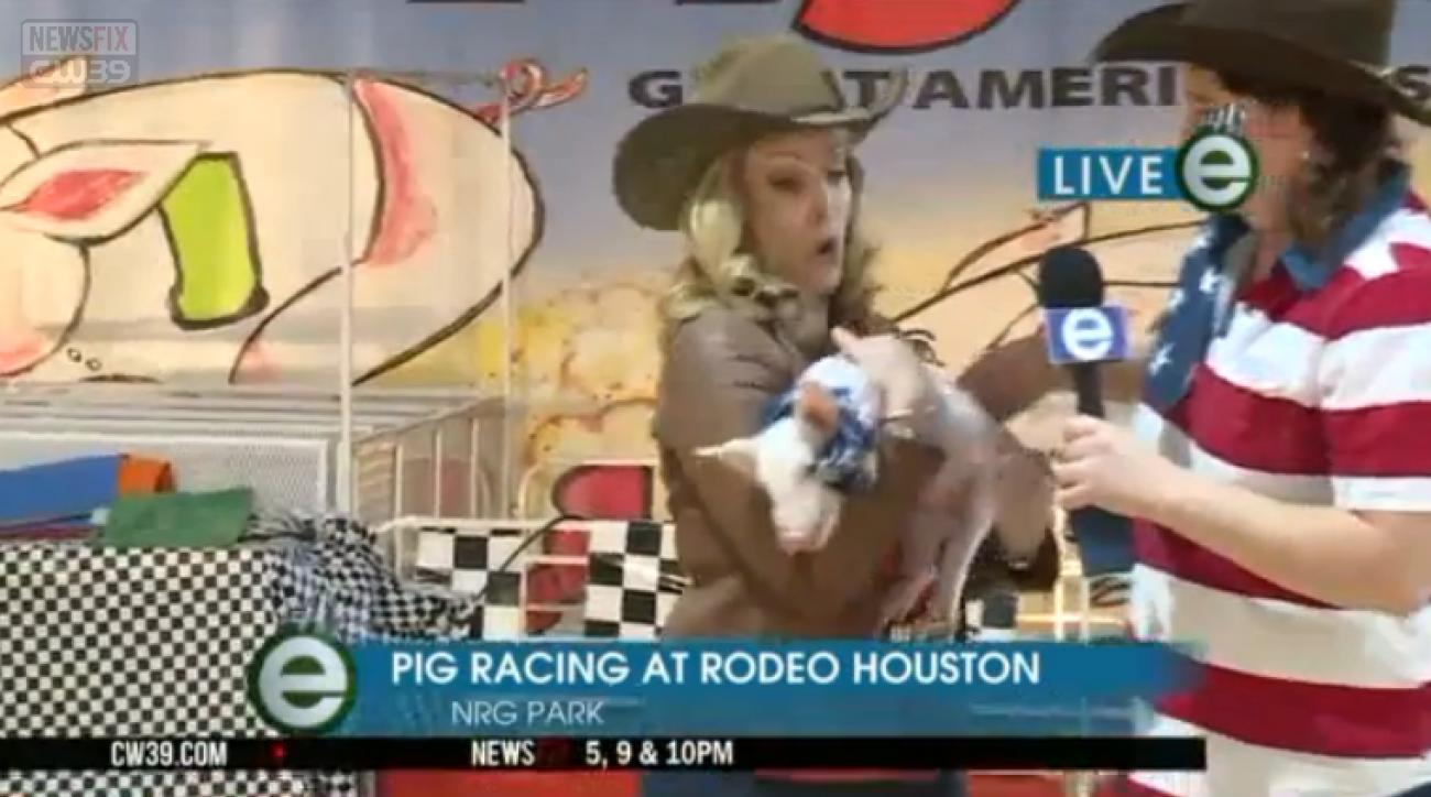 reporter pig poop live rodeo video
