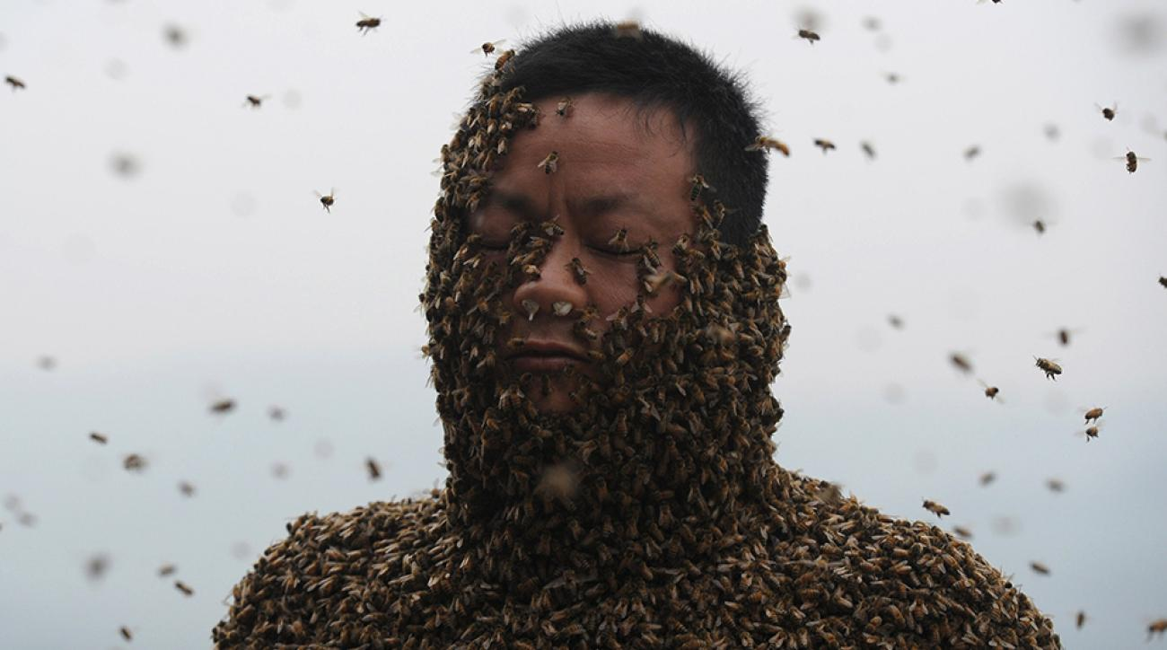 rockies royals spring training bees swarm photo