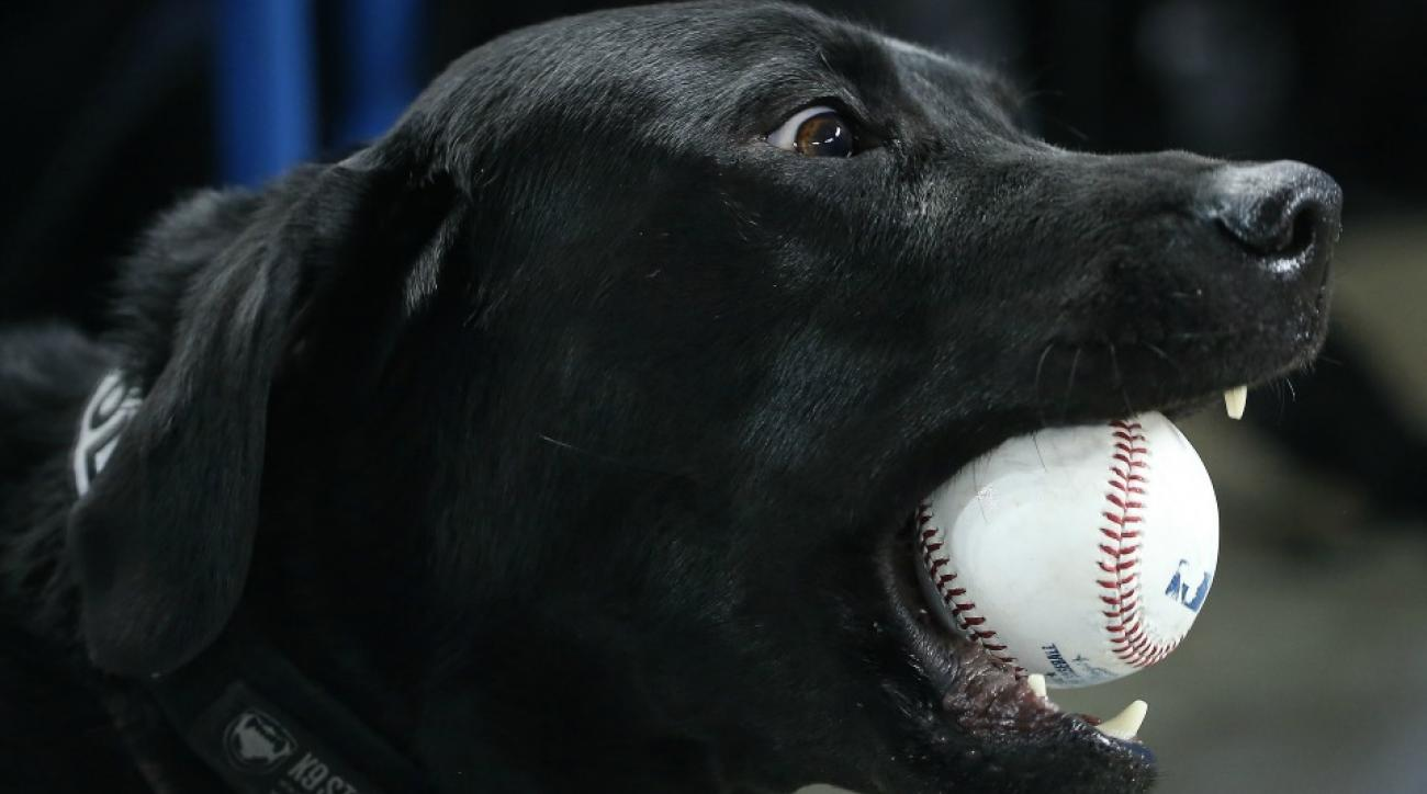 Rays let a dog suit up for a game