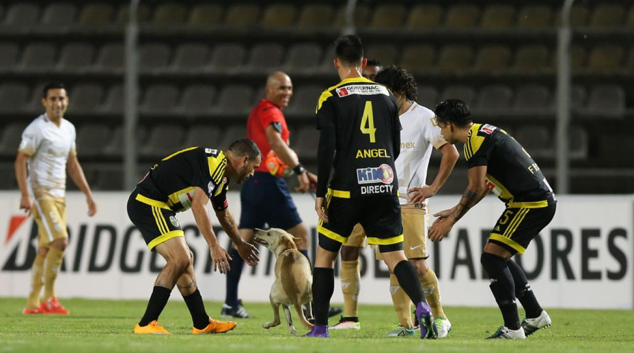 A dog invaded the pitch in the Copa Libertadores in Ecuador