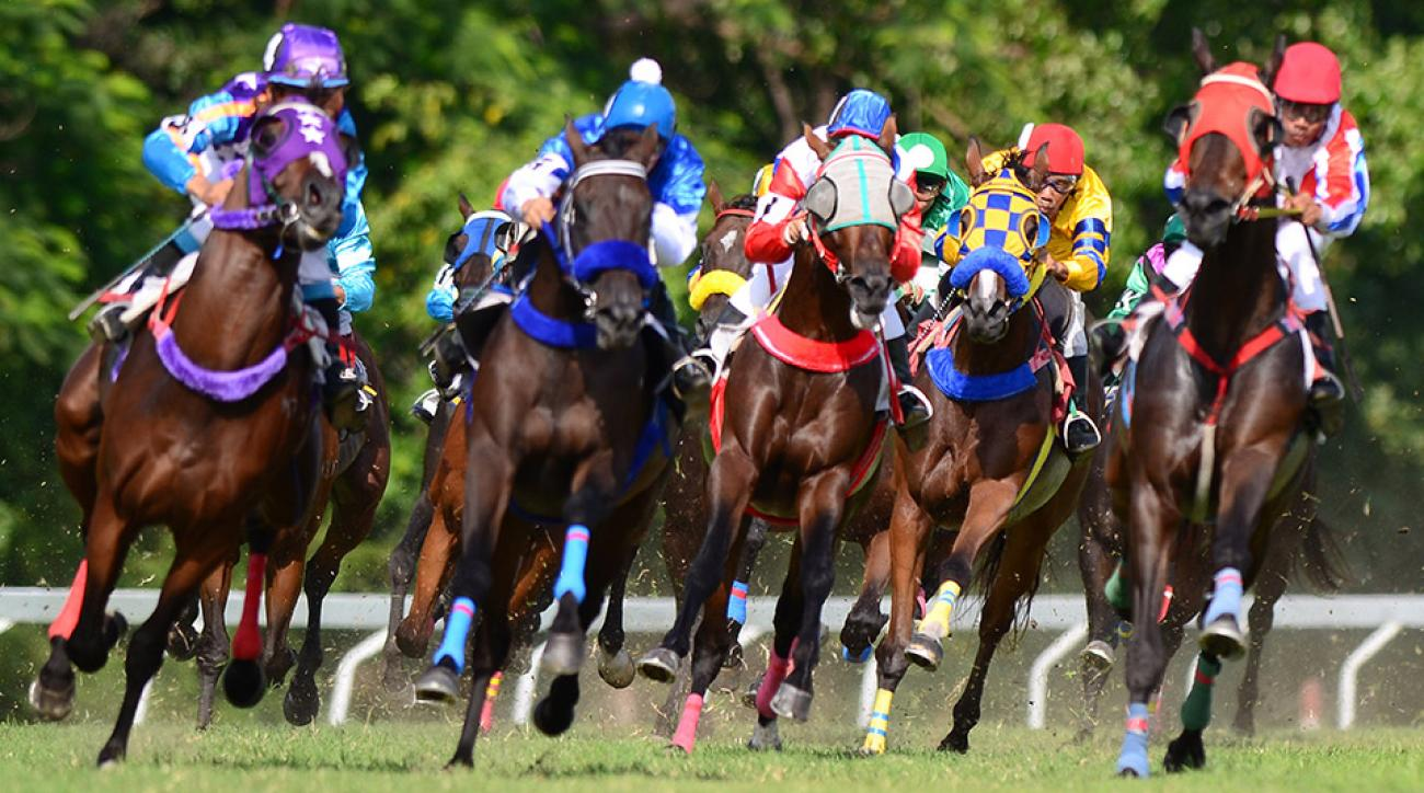 horse racing terms glossary triple crown betting basics