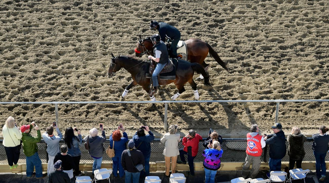 preakness stakes odds betting lines