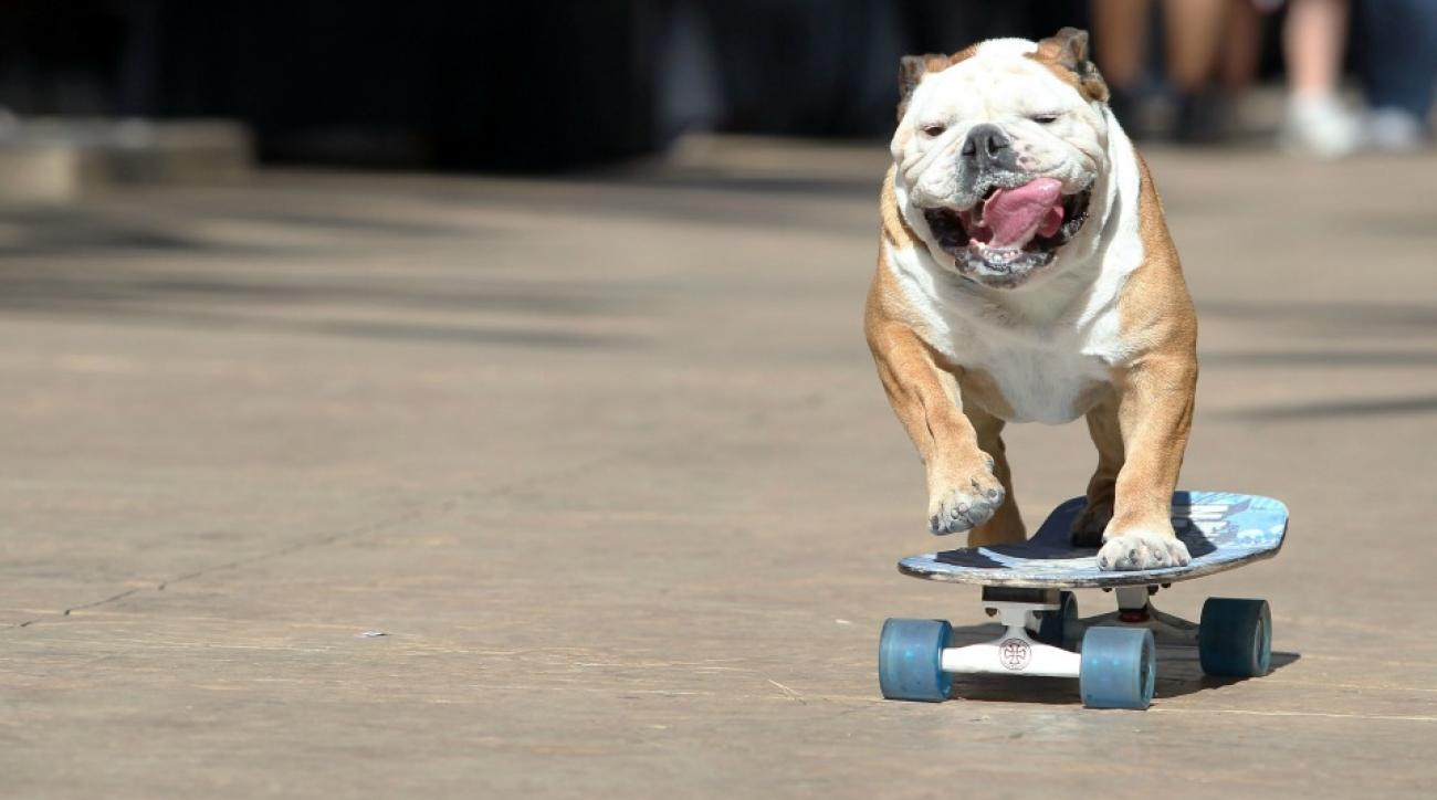 A dog went skateboarding at a Giants game