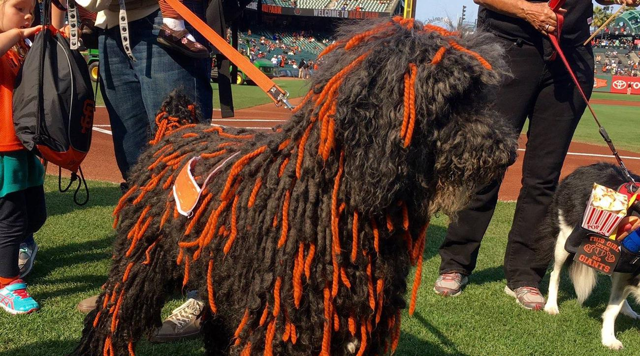 giants dog contest