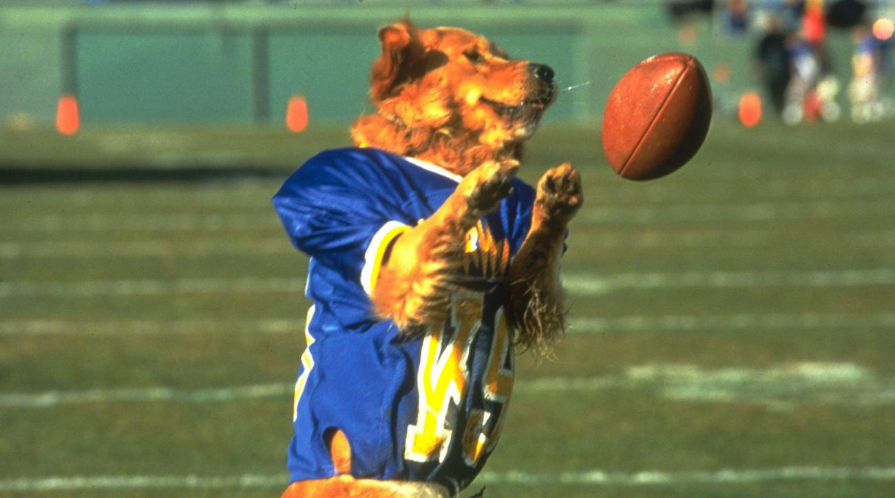 national dog day air bud movie titles ranked