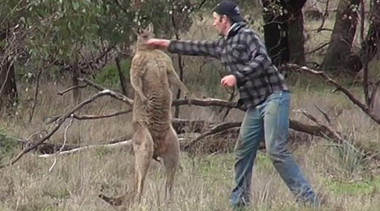 Kangaroo punch video: Men on hunting trip with dying teen