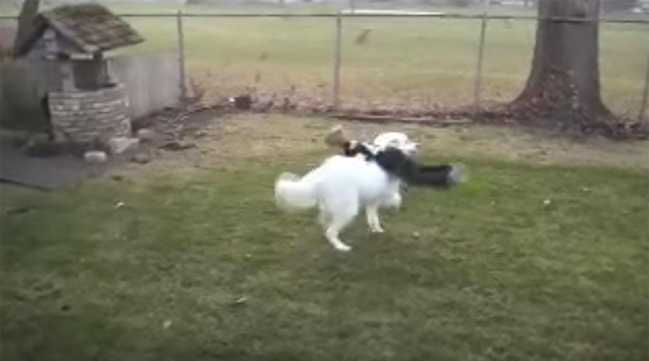 backyard catch dean blandino