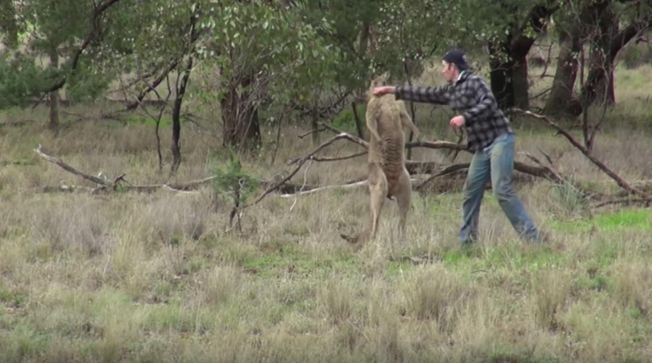 Giants' Ben McAdoo inspires team with kangaroo punch video