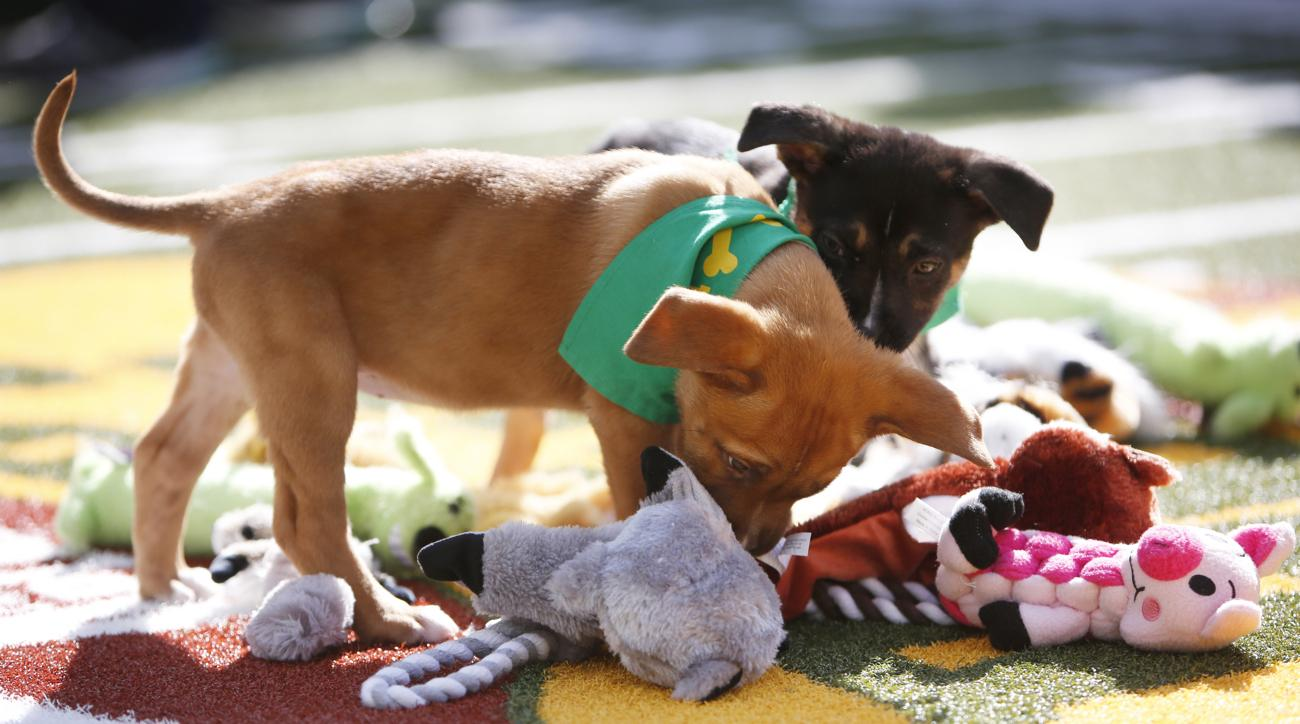 watch puppy bowl 2017 online live stream
