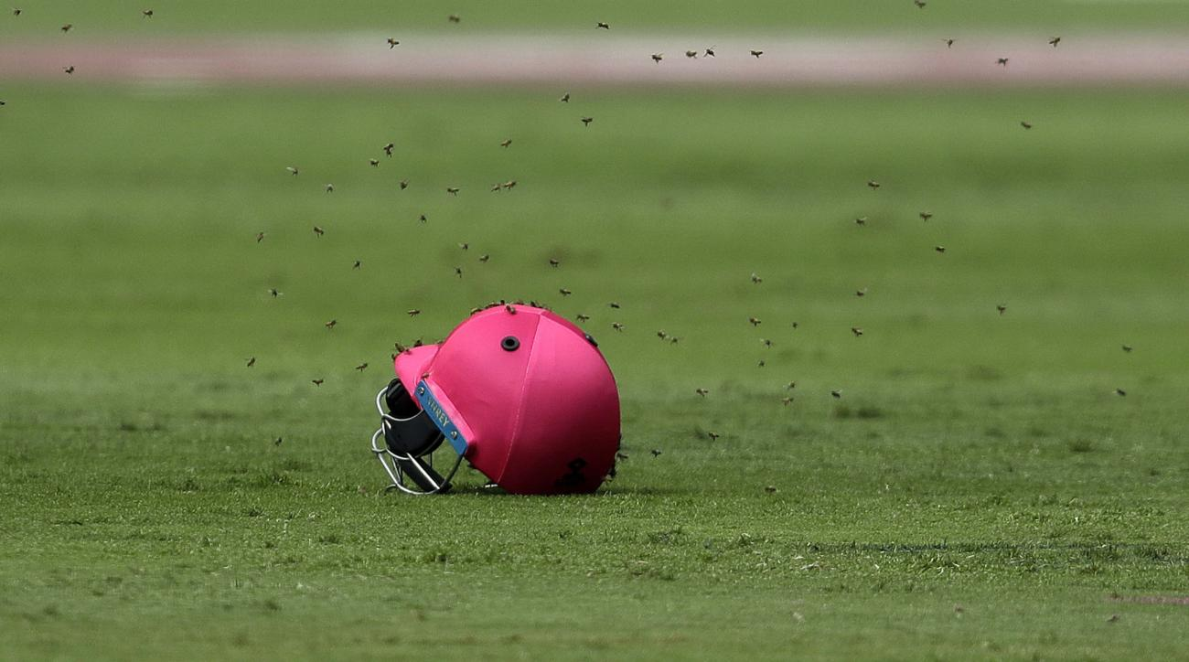 Bees swarmed a cricket match between Sri Lanka and South Africa on Saturday.