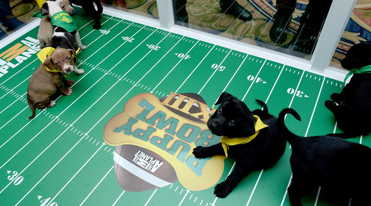 3-legged goldendoodle from Central Virginia competes in 'Puppy Bowl'