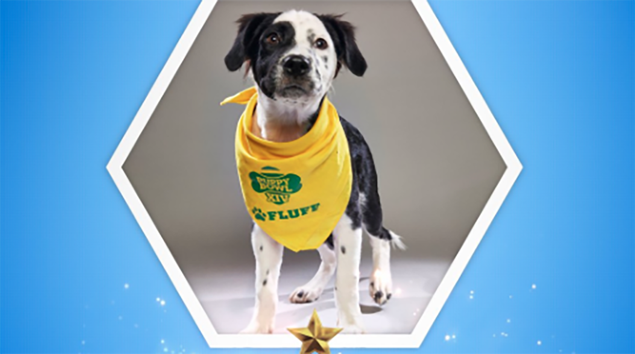 Las Vegas represented in Puppy Bowl