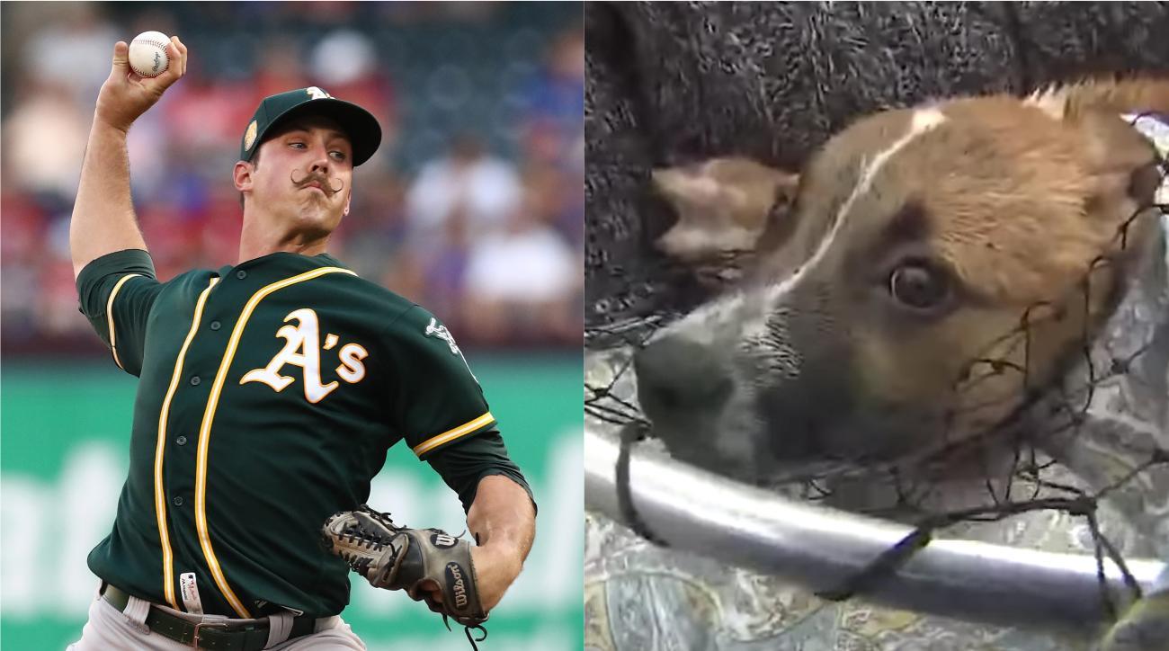 Daniel Mengden, a's, houston, Athletics, Daniel Mengden puppy rescue