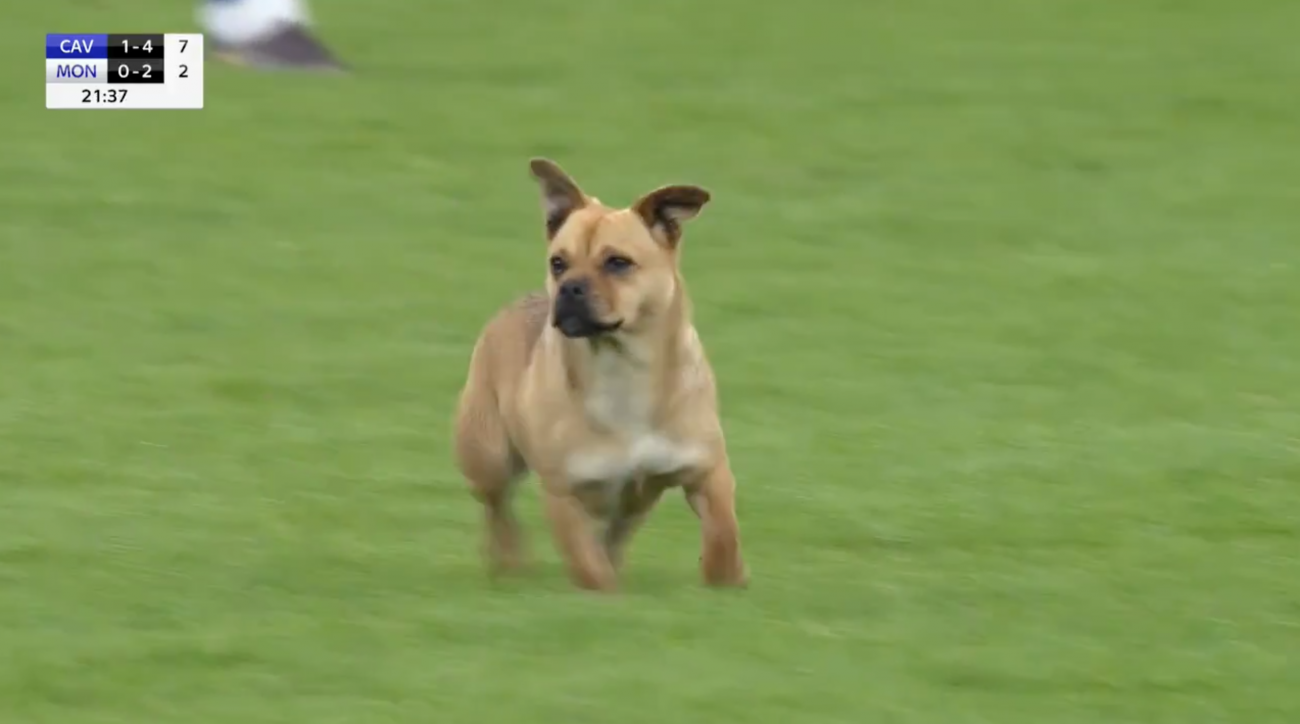 GAA: Dog on pitch at Cavan vs Monaghan game (video)
