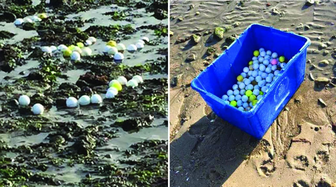 Dozens of golf balls washed up along the Long Island Sound shoreline.