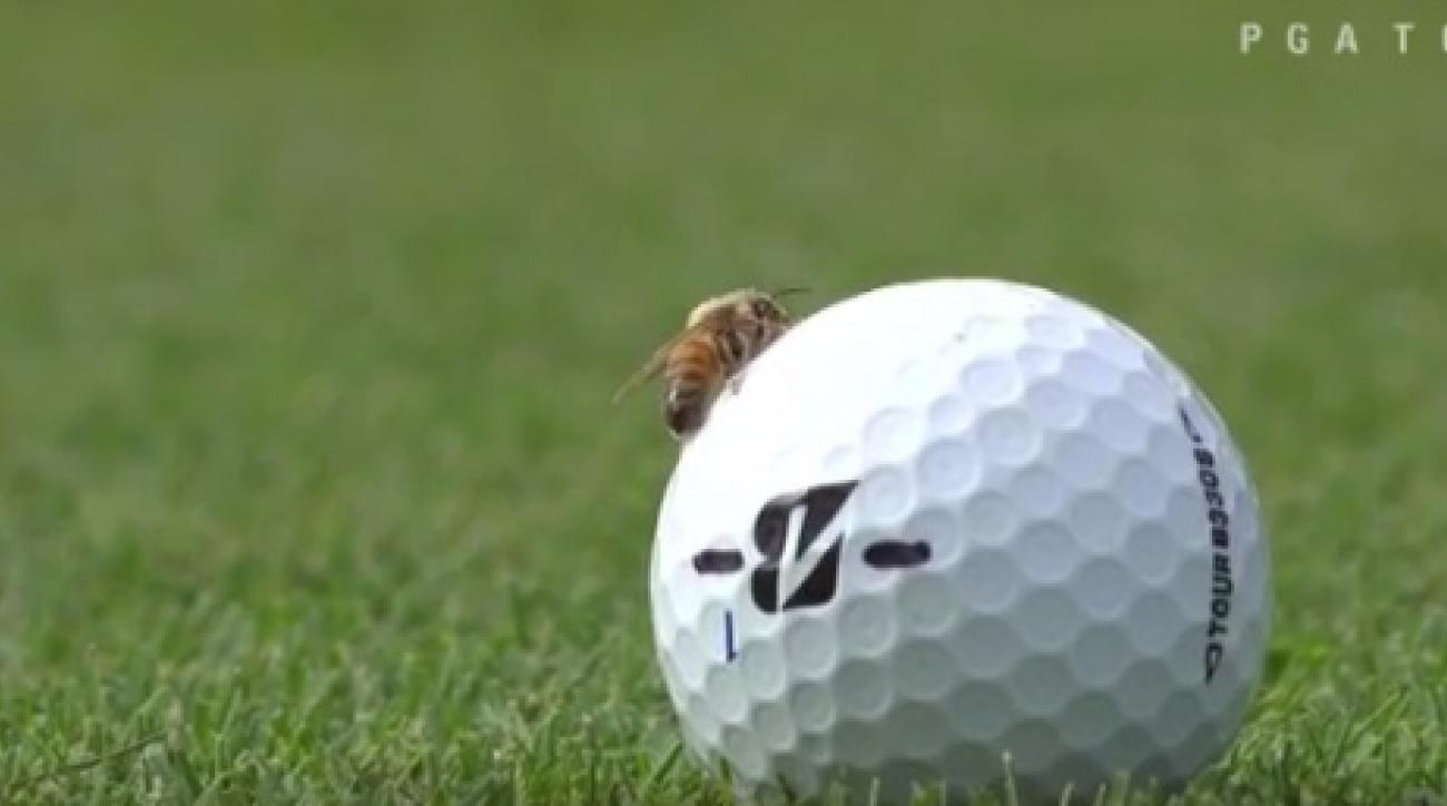 This bee caused a delay in play at the Franklin Templeton Shootout on Friday.
