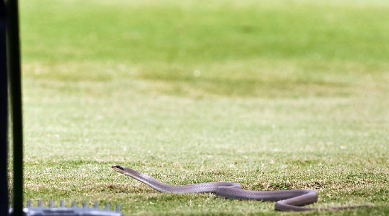 Water Moccasin, Zurich Classic