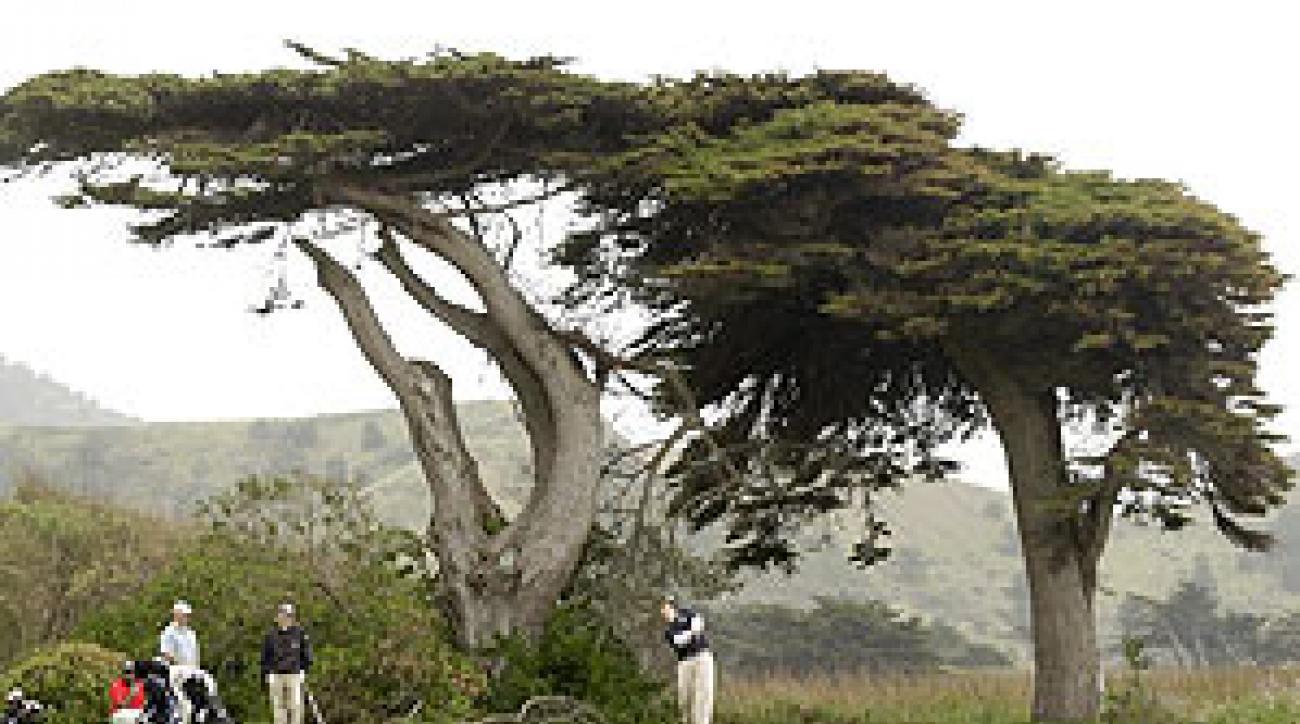 Sharp Park, an Alister MacKenzie design, is home to an endangered species.