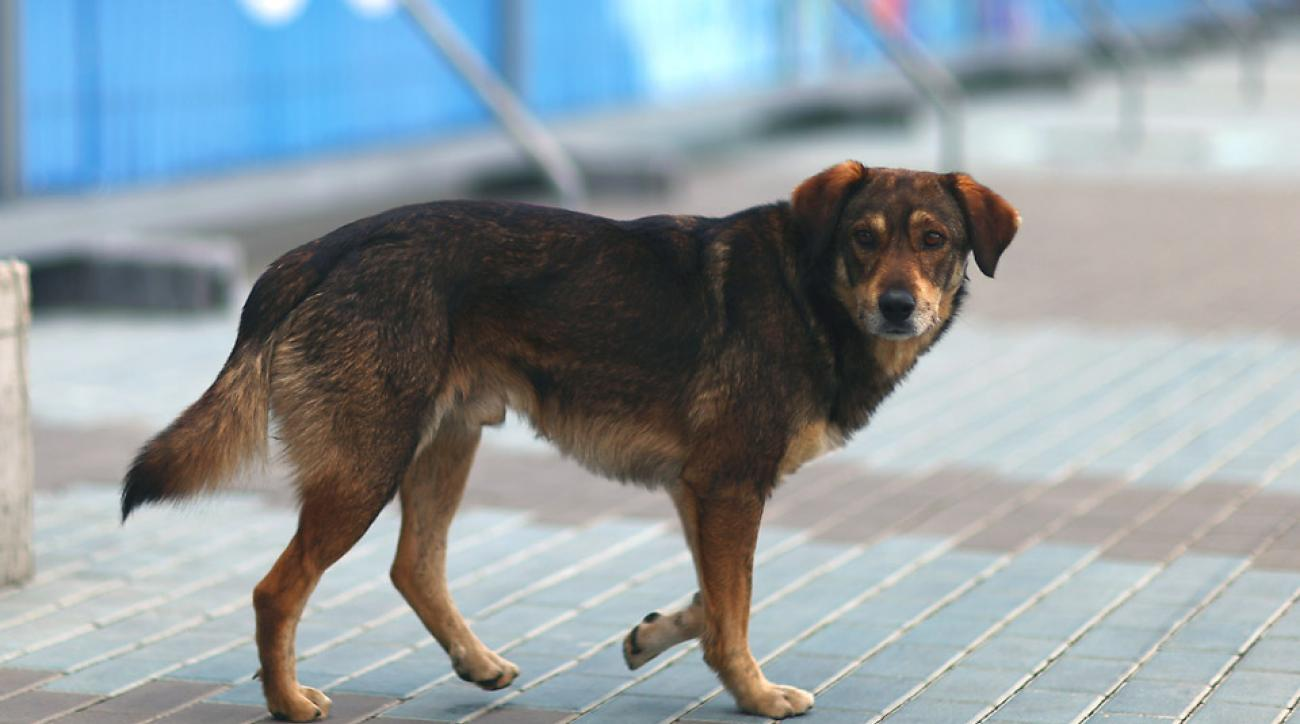 Russia ignited controversy by hiring companies to kill stray dogs around Sochi.
