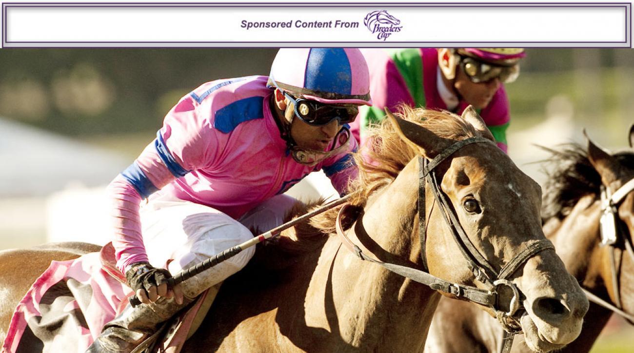 Rob Dyrdek's horse Weemissfrankie had a brilliant run as a two-year-old in 2011.