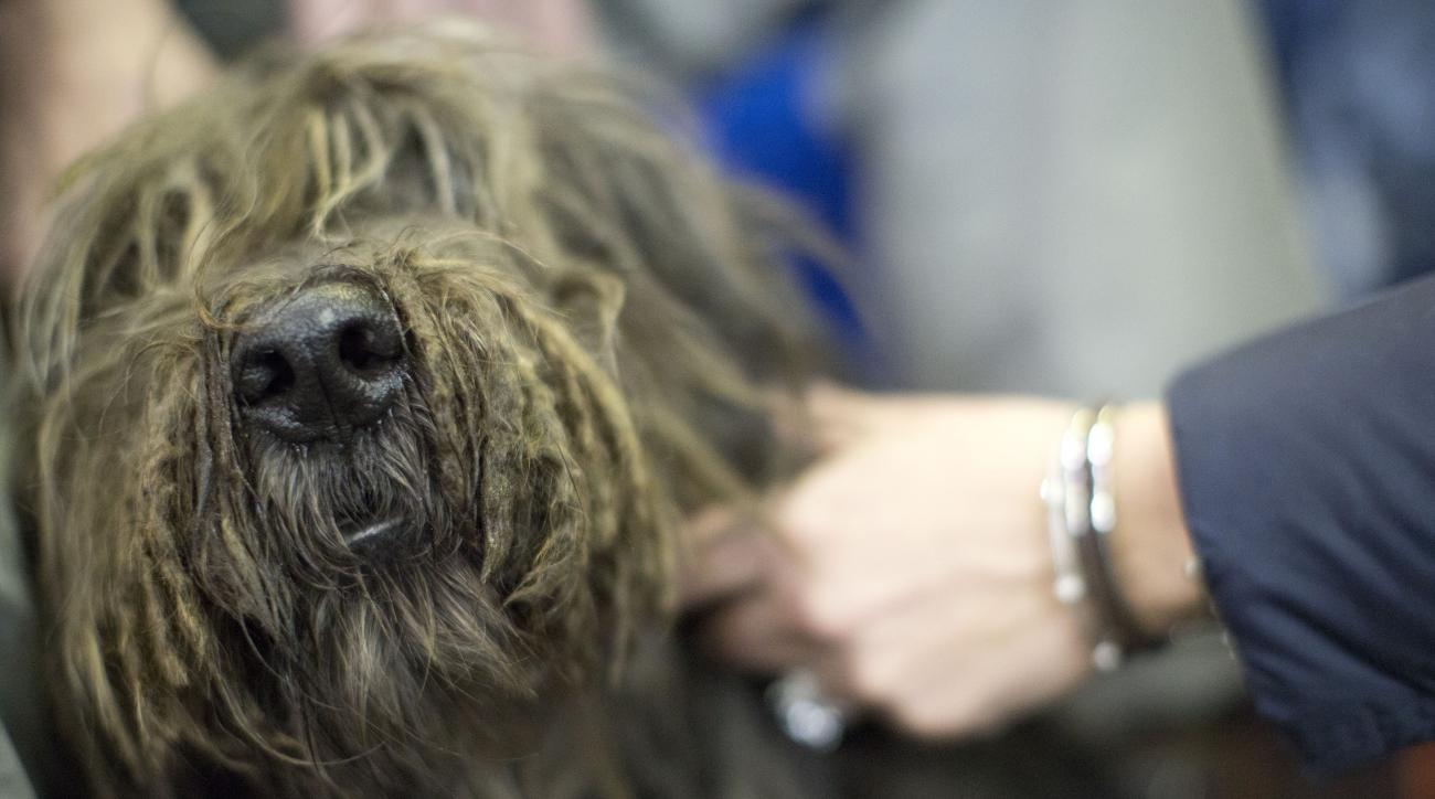 Thor, a Bergamasco, participates in the meet the breed portion of the 140th Westminster Kennel Club Dog Show, Saturday, Feb. 13, 2016, in New York. (AP Photo/Mary Altaffer)