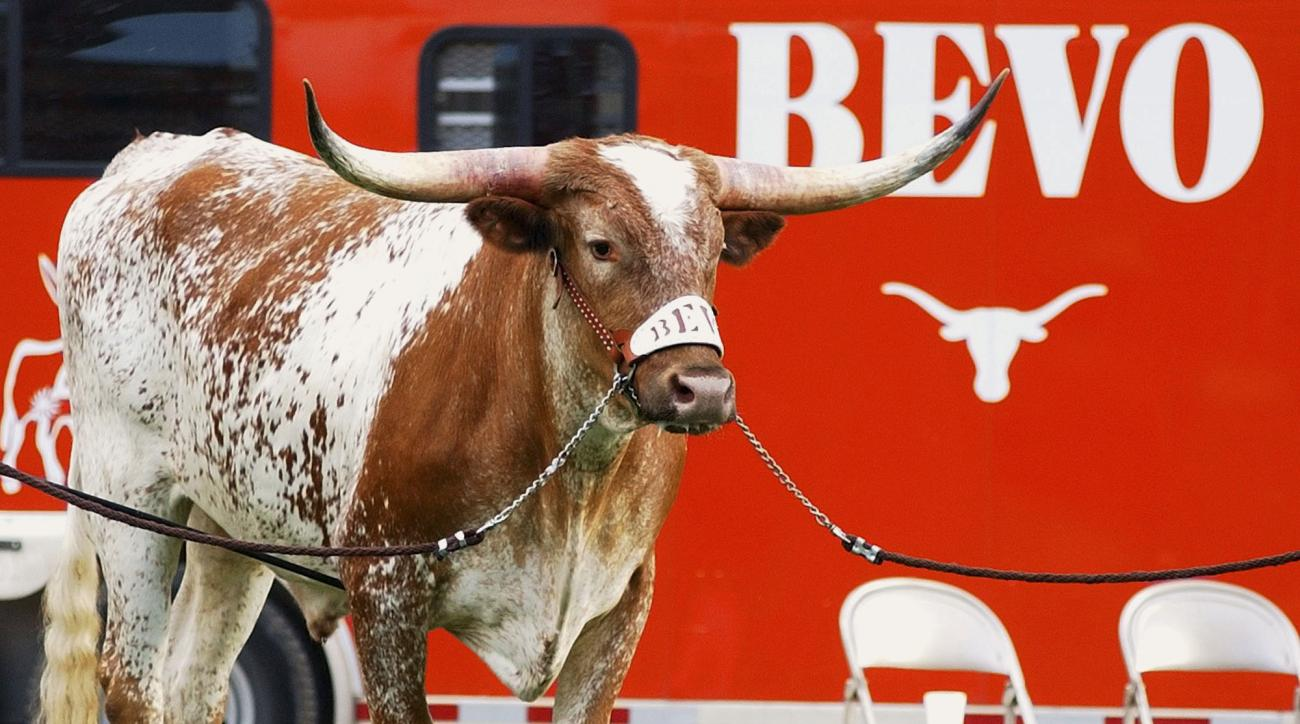 FILE - In this Sept. 4, 2004, file photo, Bevo XIV, the newest mascot of the University of Texas Longhorns makes his debut at a football game in Austin, Texas. The University of Texas says its longhorn steer mascot has died after recently being diagnosed