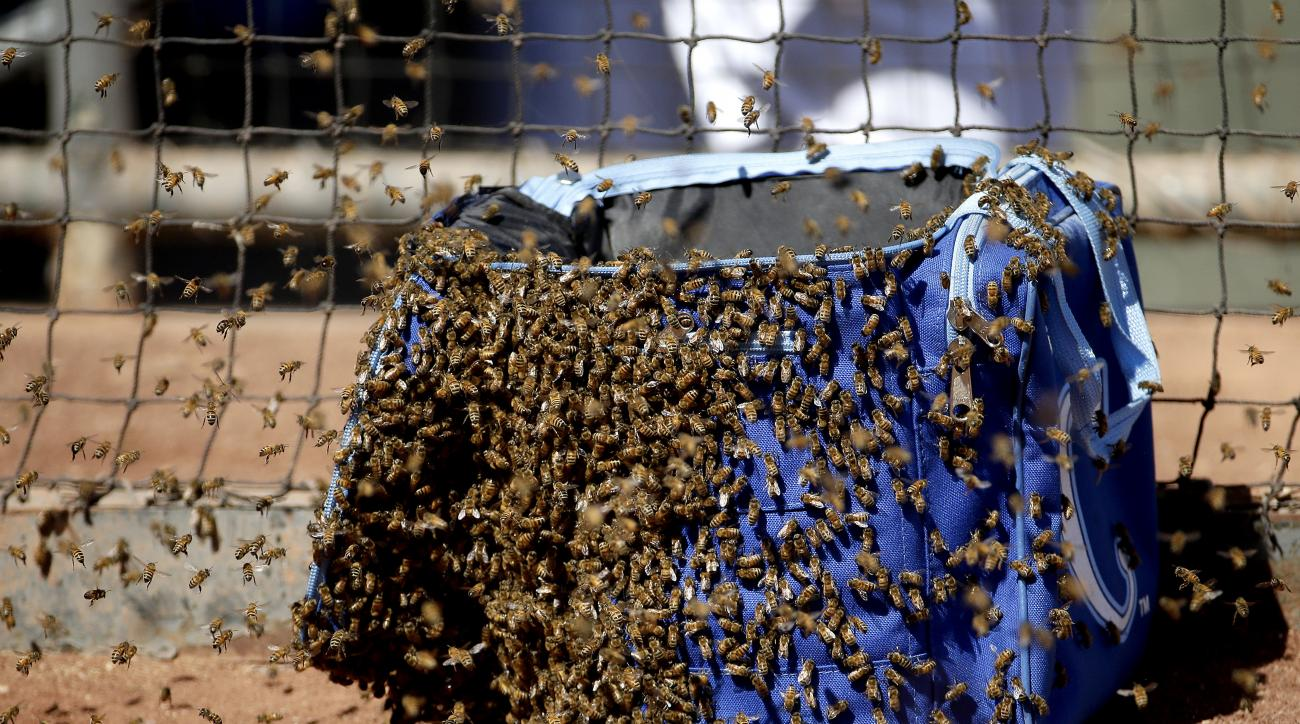 Bees swarm on a bag near the Kansas City Royals' dugout during the second inning of a spring training baseball game against the Colorado Rockies Tuesday, March 8, 2016, in Surprise, Ariz. (AP Photo/Charlie Riedel)