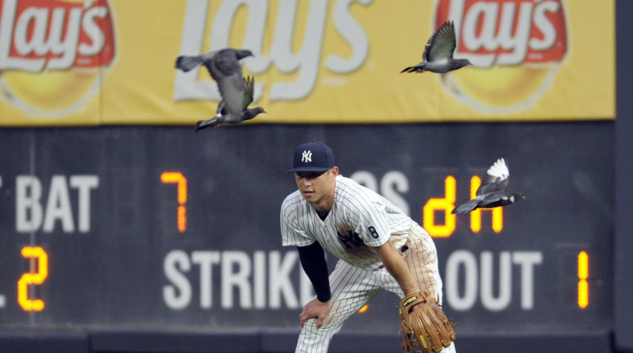 In this Saturday, Sept. 10, 2016 photo, New York Yankees right fielder Rob Refsnyder looks on as he is joined by pigeons during the eighth inning of a baseball game against the Tampa Bay Rays at Yankee Stadium in New York. A flock of newcomers quickly swo
