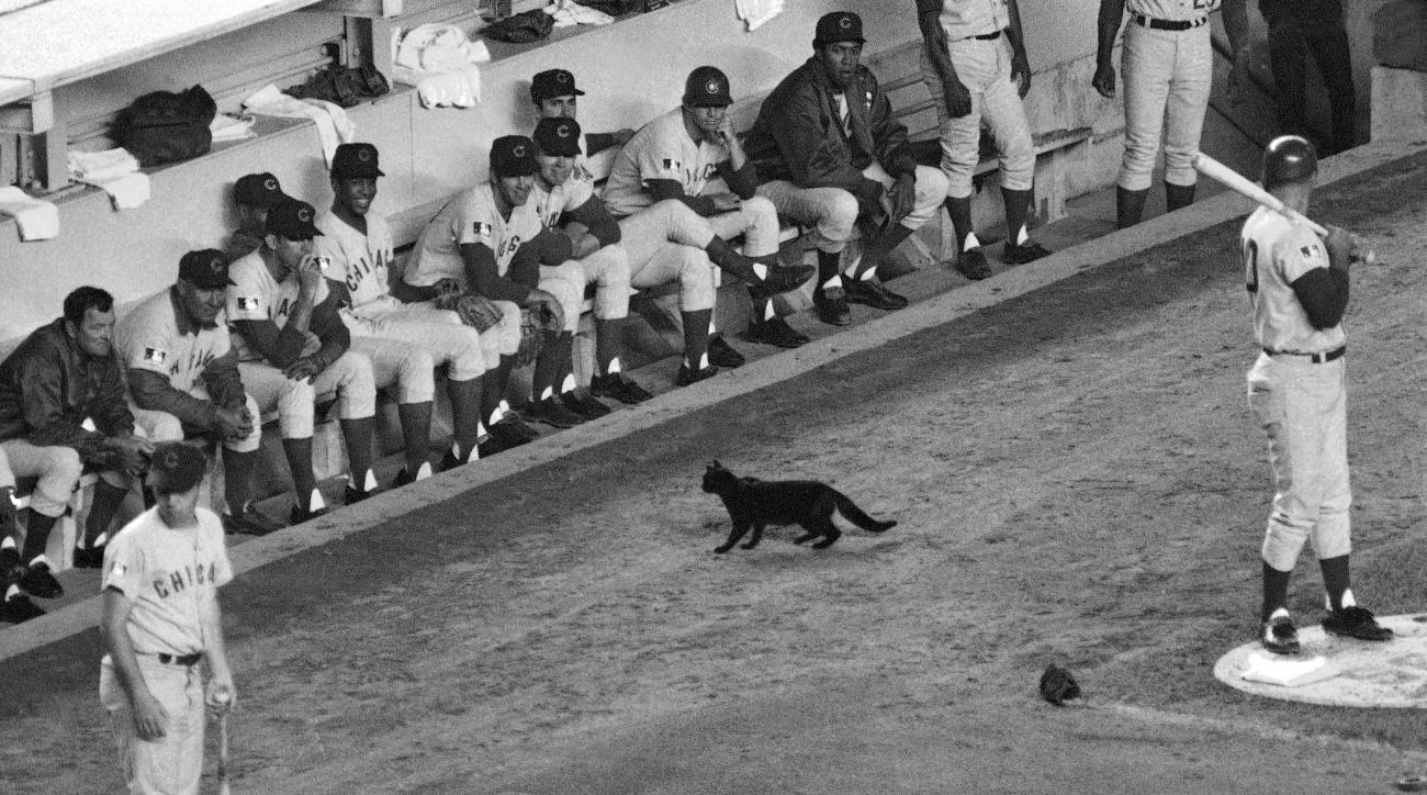 FILE - In this Sept. 9, 1969, file photo, a black cat stands in front of the Chicago Cubs' dugout during the first inning of a baseball game against the New York Mets in New York. Cubs fans Erik Williams and Brad Knaub are hoping to exorcise the Curse of