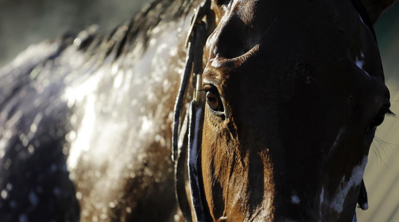 A horse gets a bath after a morning workout at Churchill Downs Friday, May 1, 2015, in Louisville, Ky. (AP Photo/Jeff Roberson)