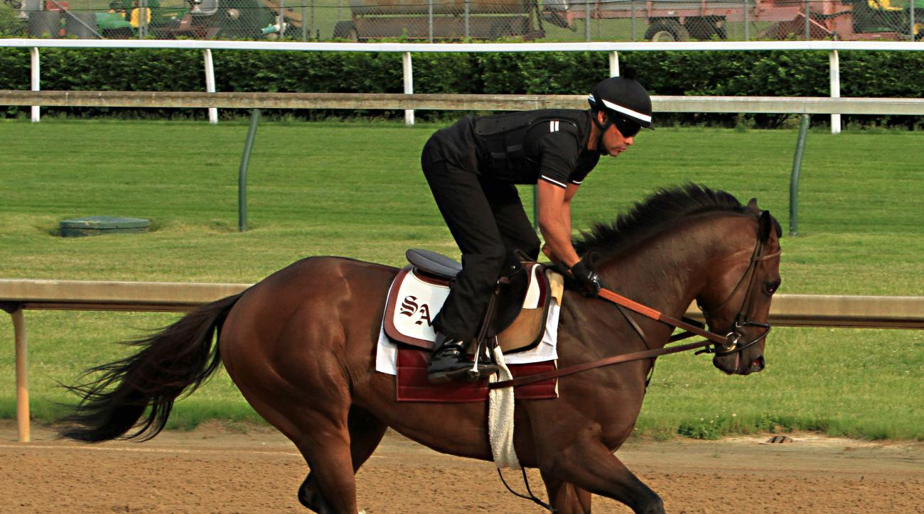 Exercise rider Umberto Gomez gallops Kentucky Derby runner-up Firing Line at Churchill Downs in Louisville, Ky., Monday, May 11, 2015, in preparations for a start in the 140th Preakness Stakes in Baltimore on May 16.  (AP Photo/Garry Jones)