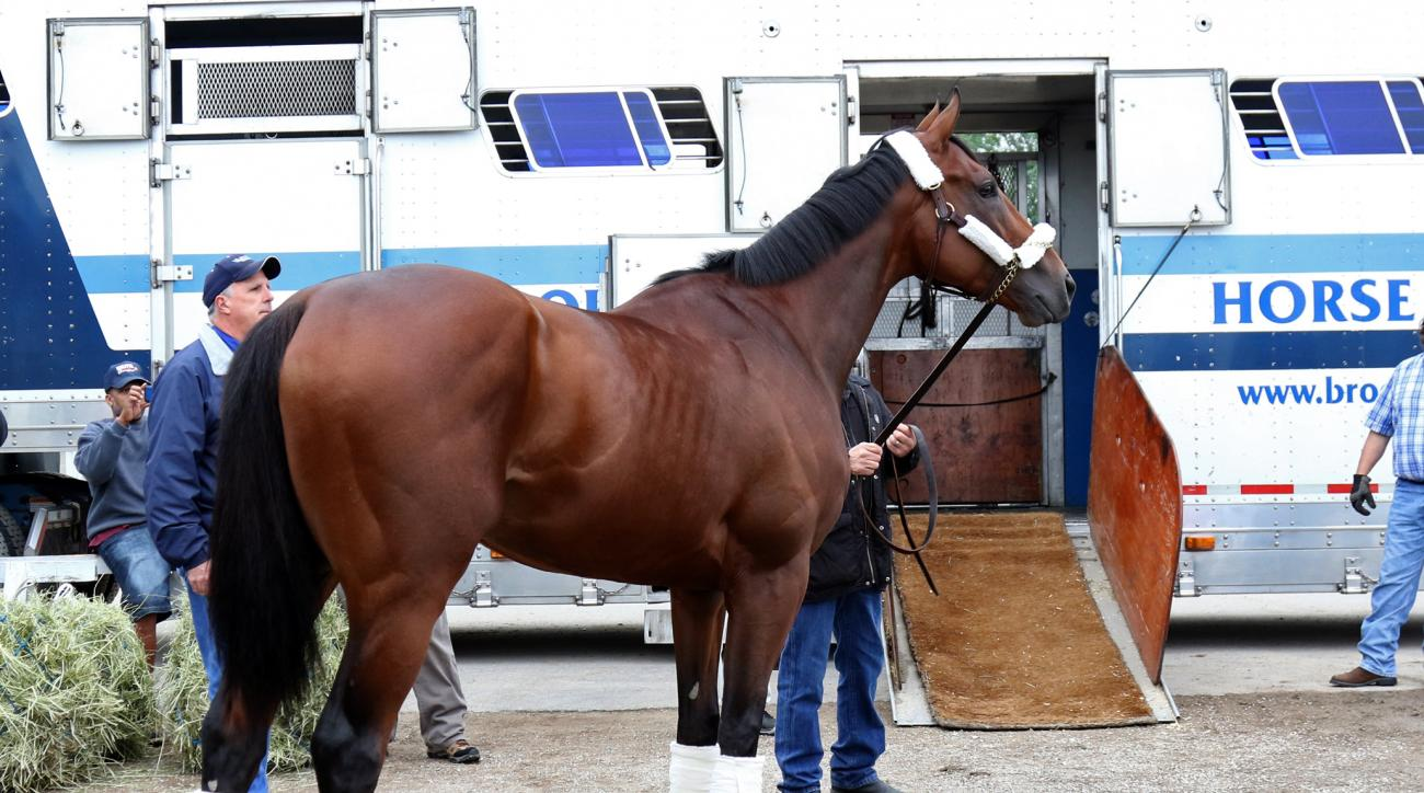 In this photo provided by Churchill Downs, American Pharoah is led to a trailer, Wednesday, June 2, 2015, at Churchill Downs in Louisville Ky., as the Kentucky Derby and Preakness Stakes winner is prepped to travel to New York for Saturday's the Belmont S