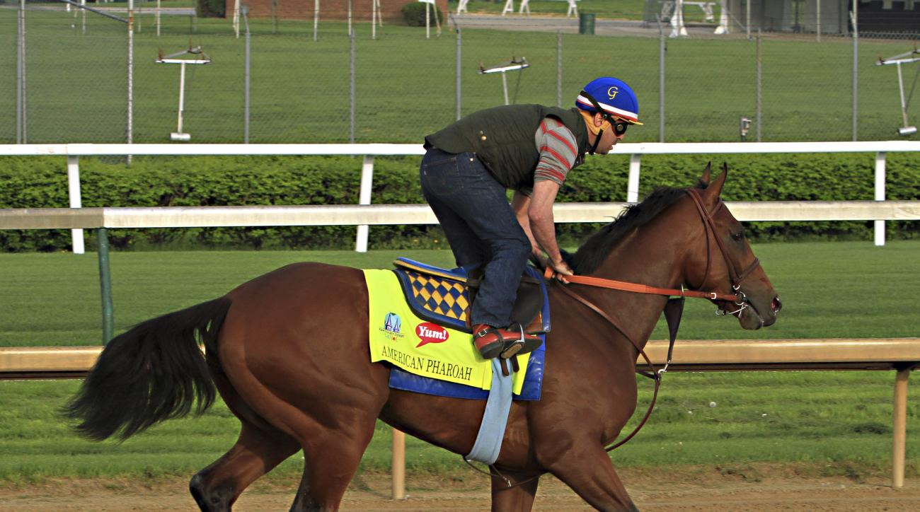 FILE - In this Saturday, April 18, 2015 file photo, exercise rider George Alverez gallops American Pharaoh over the track at Churchill Downs in Louisville, Ky. Like a lot of athletes, American Pharoah has his quirks. The brown colt is easy to pick out on