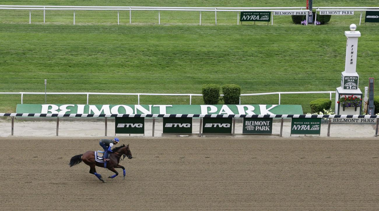 Kentucky Derby and Preakness Stakes winner American Pharoah, with exercise rider Jorge Alvarez up, gallops around the track at Belmont Park, Friday, June 5, 2015, in Elmont, N.Y. American Pharoah will try for a Triple Crown when he runs in Saturday's 147t