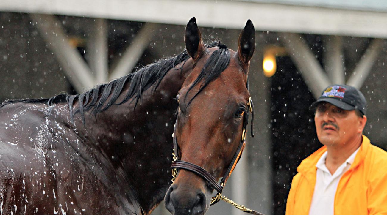 FILE - In this May 25, 2015, file photo, American Pharoah is held by Raul Ramirez as he is bathed outside Barn 33 at Churchill Downs in Louisville, Ky. The race, date and place are set for American Pharoah's next start: the Haskell Invitational, Aug. 2, a