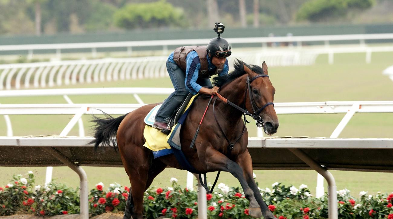 In a photo provided by Benoit Photo, Triple Crown winner American Pharoah trains Saturday morning, July 18, 2015, at Del Mar Race Track in Del Mar, Calif.  Trainer Bob Baffert oversaw the champ and jockey Martin Garcia in preparation for a planned start i