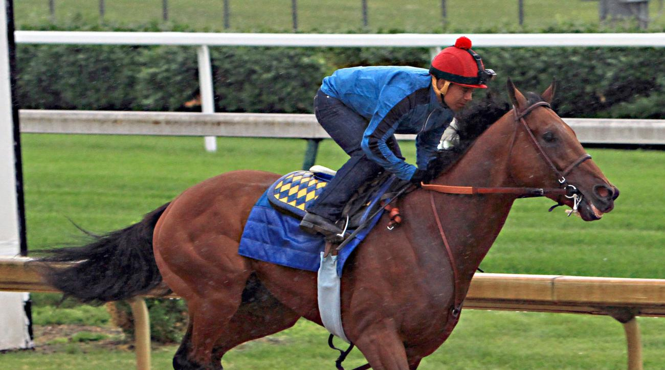 FILE - In this June 1, 2015, file photo, American Pharoah, ridden by jockey Martin Garcia, powers through a timed workout at Churchill Downs in Louisville, Ky. As racing's first Triple Crown champion in 37 years is wrapping up preparations to run in Satur