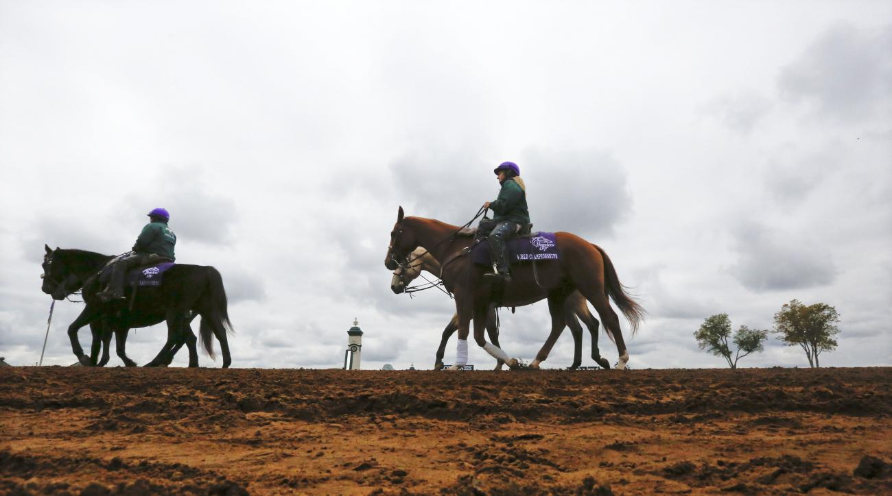 Horses are led to the starting gate for the first race of the day at Keeneland race track Friday, Oct. 30, 2015, in Lexington, Ky. The Breeders' Cup World Championship races begin later in the day. (AP Photo/Brynn Anderson)